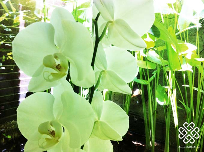 希少な植物エッセンスの香り