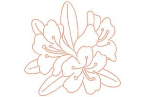 アンソポーゴン Rhododendron Anthopogon D. Don